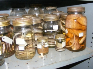 Livingstone Museum Research - Herpetology